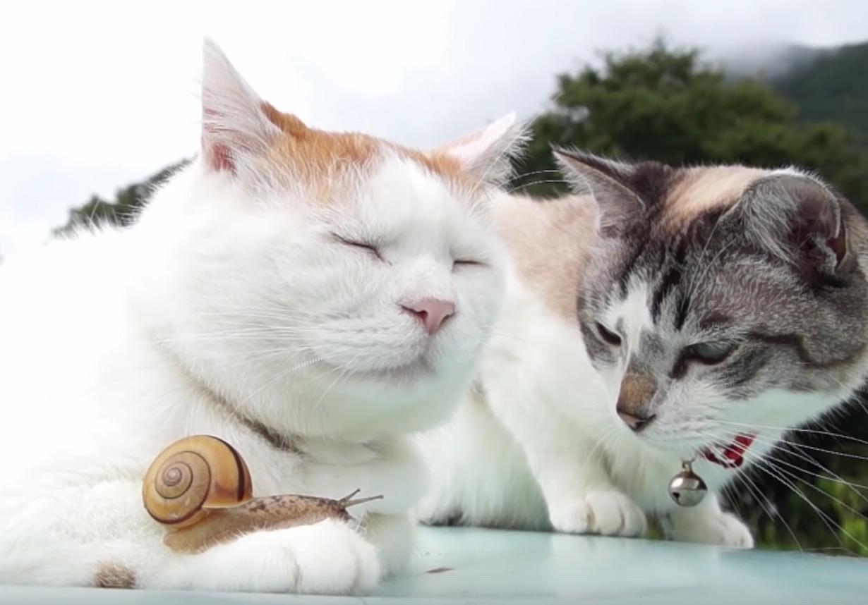 Premiere rencontre 2 chats
