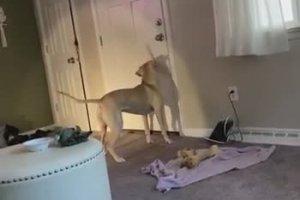 Un chien chercher l'ombre de sa queue