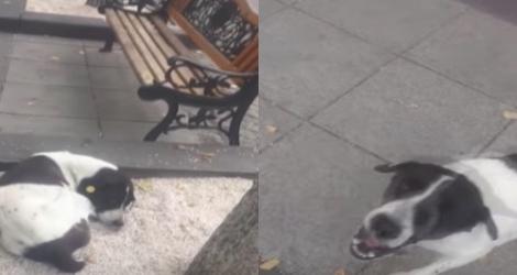 Après 3 ans un homme retrouve son chien perdu (Géorgie)