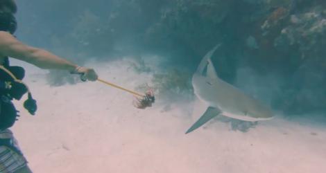 Un requin avale la GoPro d'un plongeur