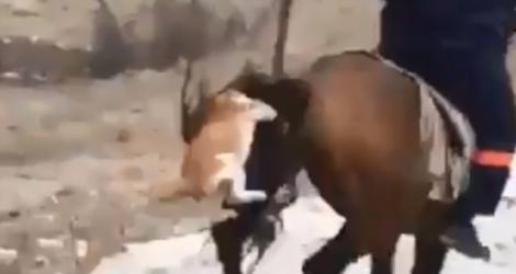 Un chat rend fou un cheval
