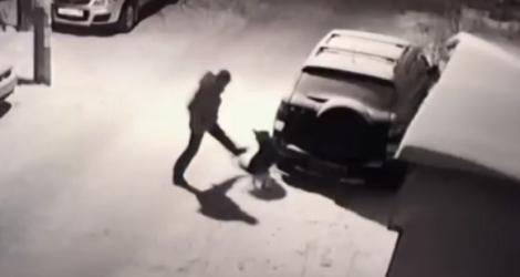Un homme attaque un chien et se fait corriger par Karma (Russie)