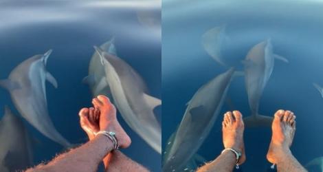 Un surfeur voit passer des dauphins sous ses pieds (Maldives)