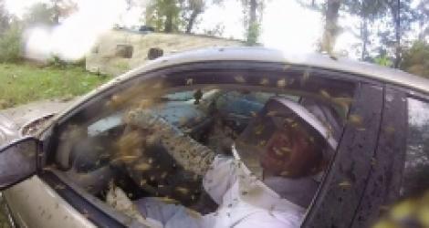 Cet homme partage sa voiture avec des guêpes