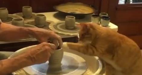 Un chat fait de la poterie