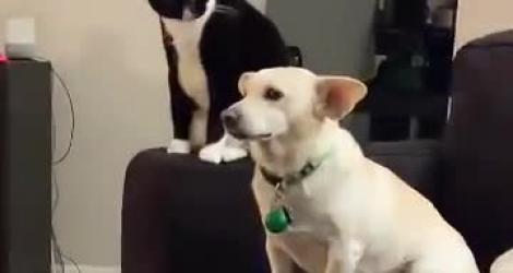 Un chat prend son temps avant de frapper un chien