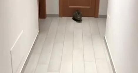 Il joue au foot avec son chat pendant le confinement