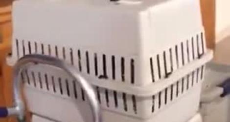 Il retrouve un bébé en pleurs dans une cage
